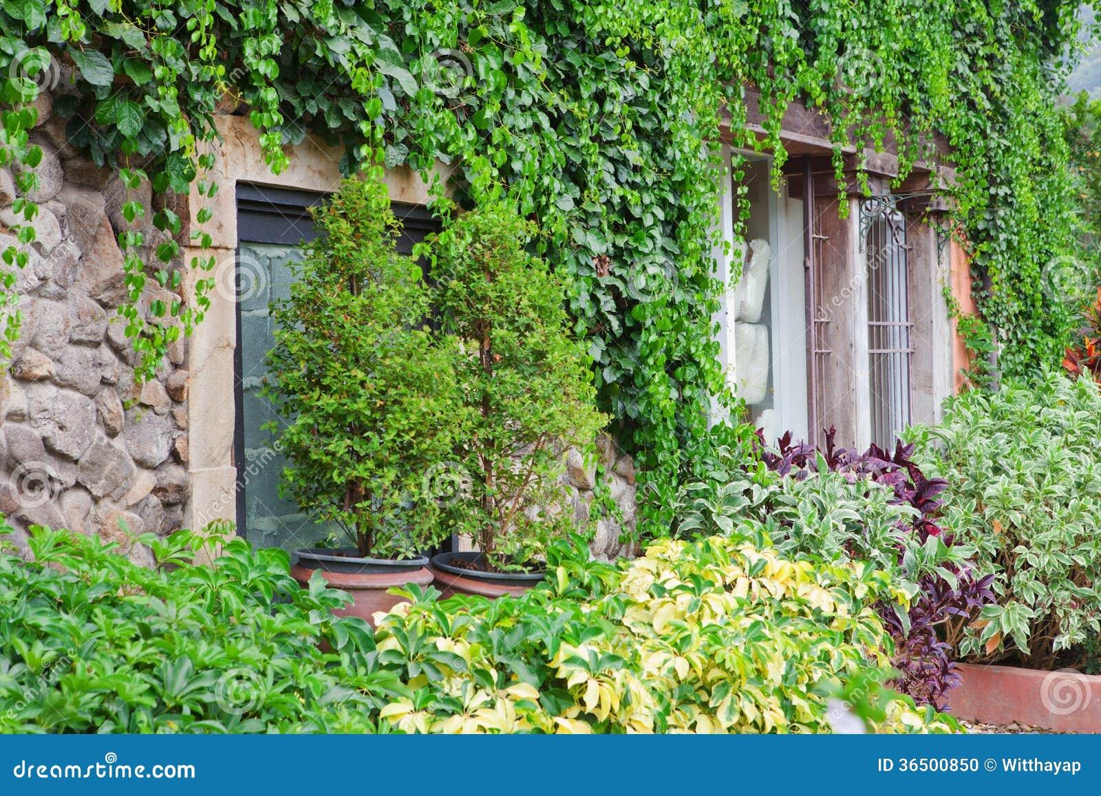 Mur couvert de vigne
