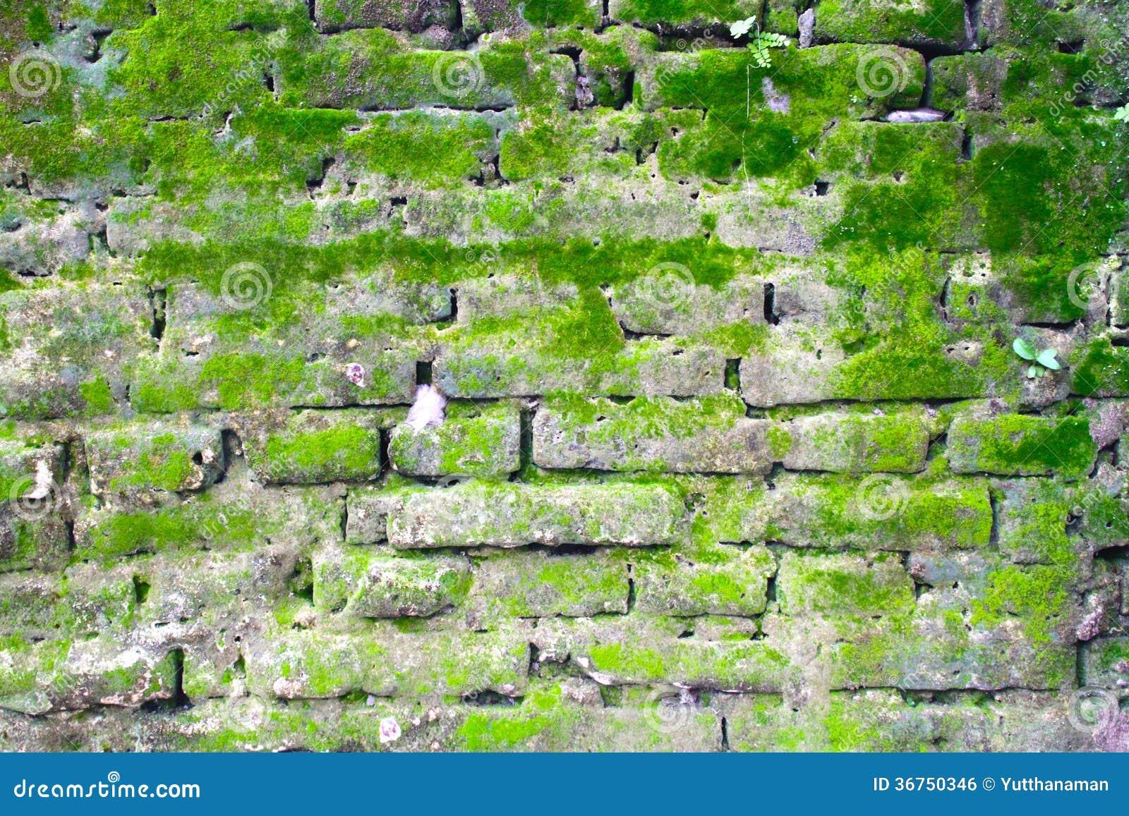 mur de briques avec de la mousse image libre de droits image 36750346. Black Bedroom Furniture Sets. Home Design Ideas