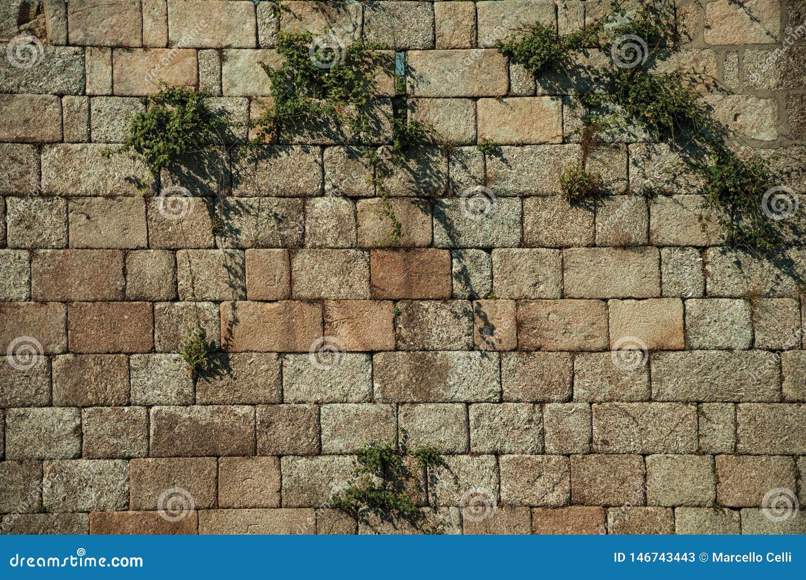 Mur fait de grandes pierres de brique et plantes vertes