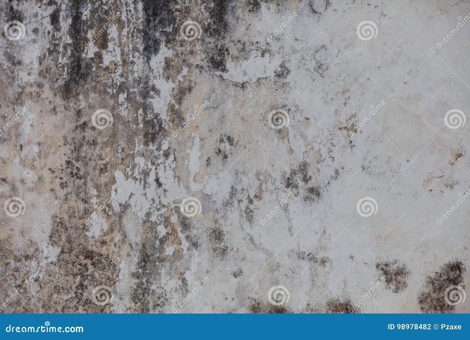 Mur sombre avec le moule