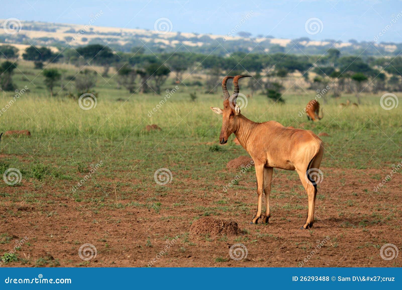Murchison下跌NP,乌干达,非洲