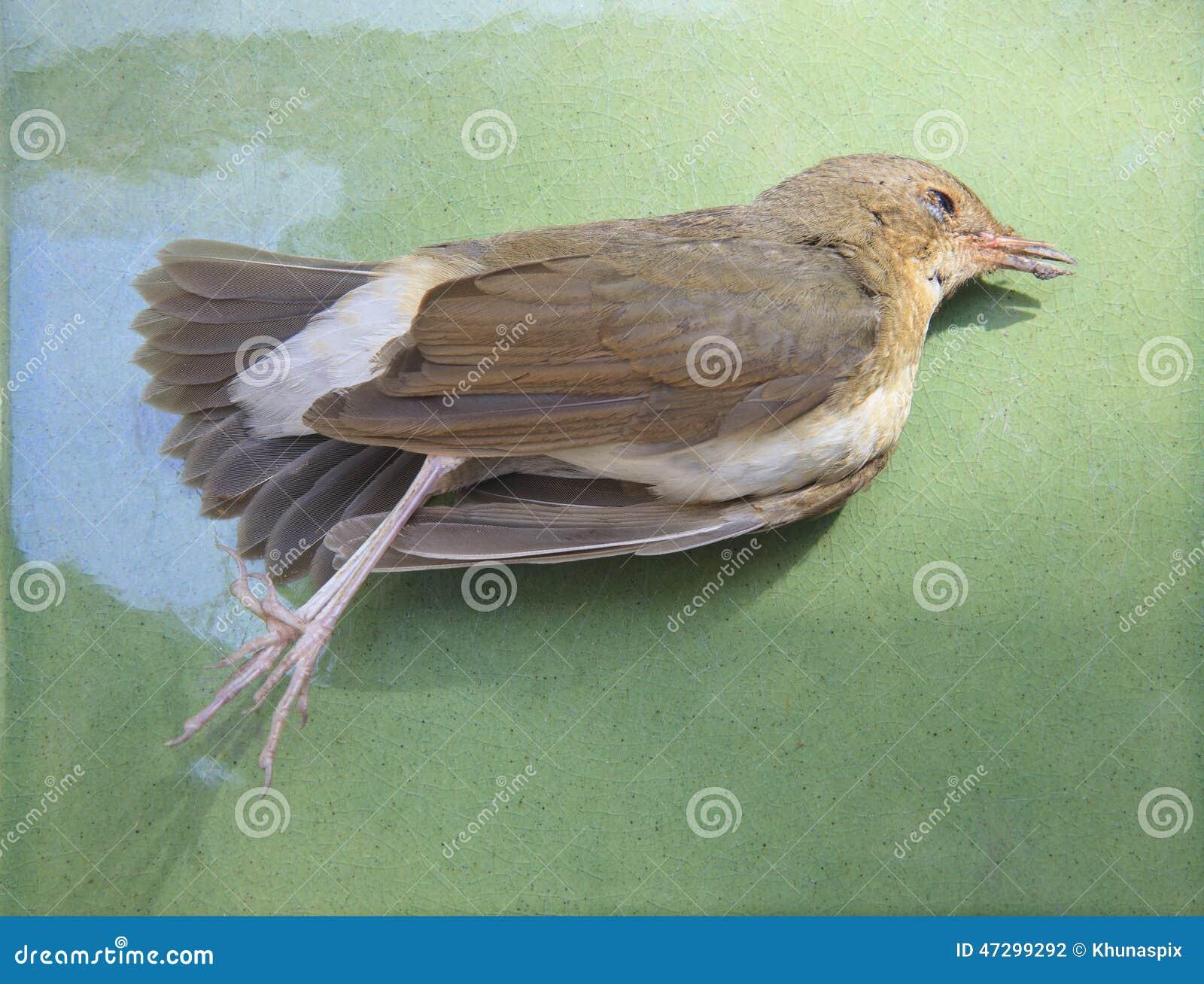 Murió el pájaro en el verde para el uso para el desastre de la naturaleza y el influenz aviar