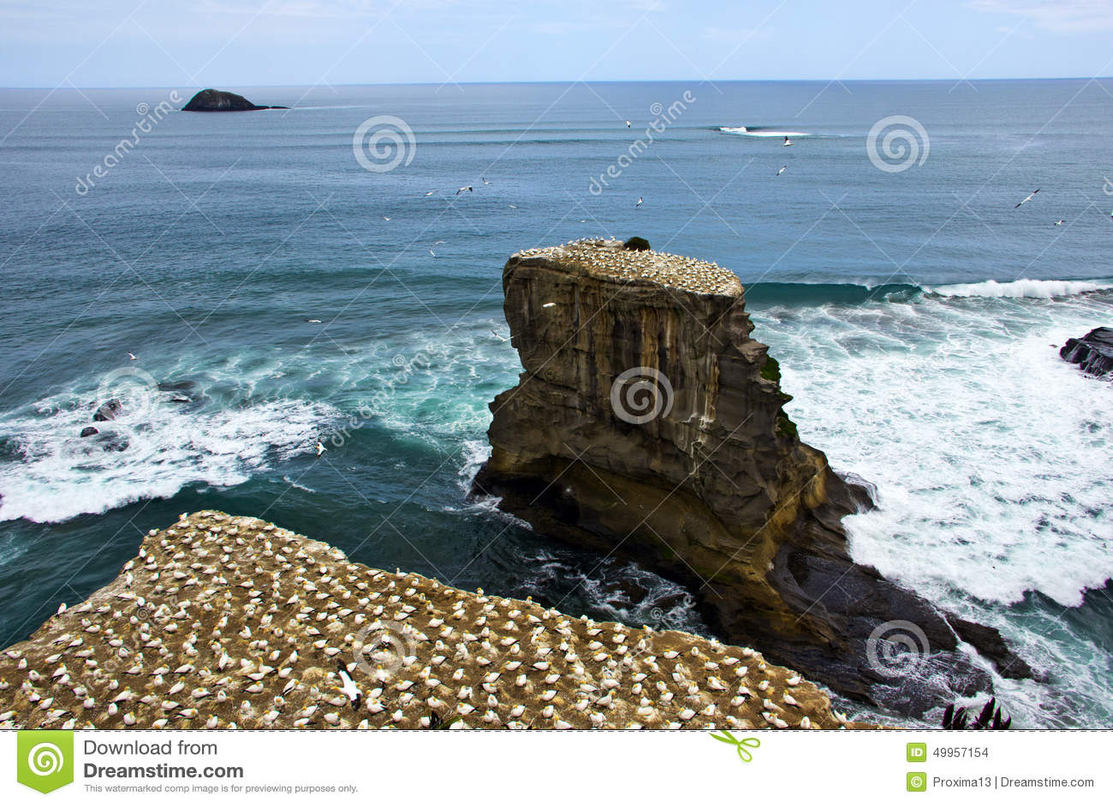 Muriwai havssulakoloni i Auckland