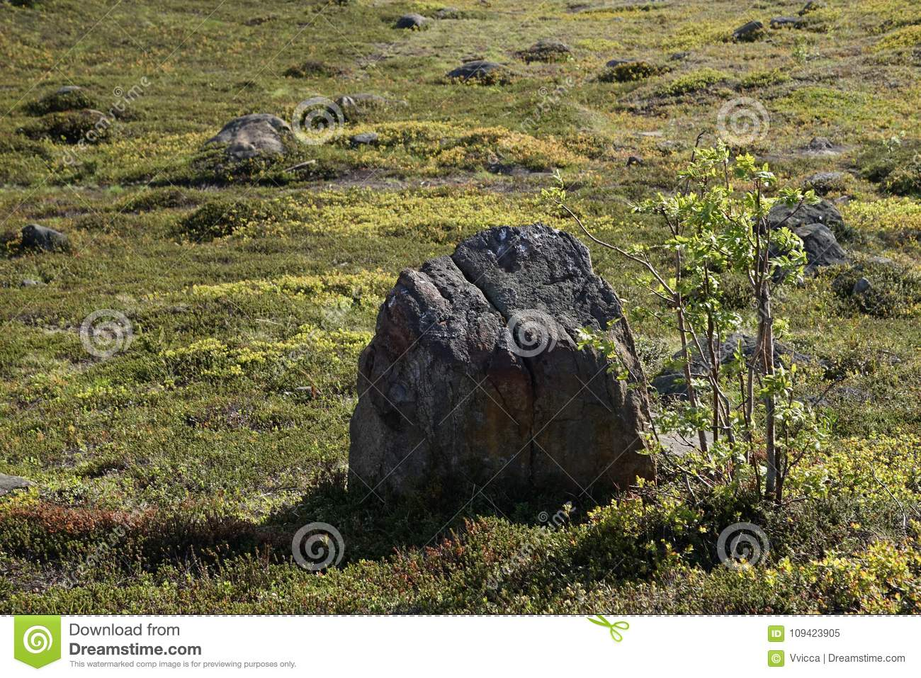 A group of stones lying on the green spring grass in Murmansk on a clear, Sunny day.