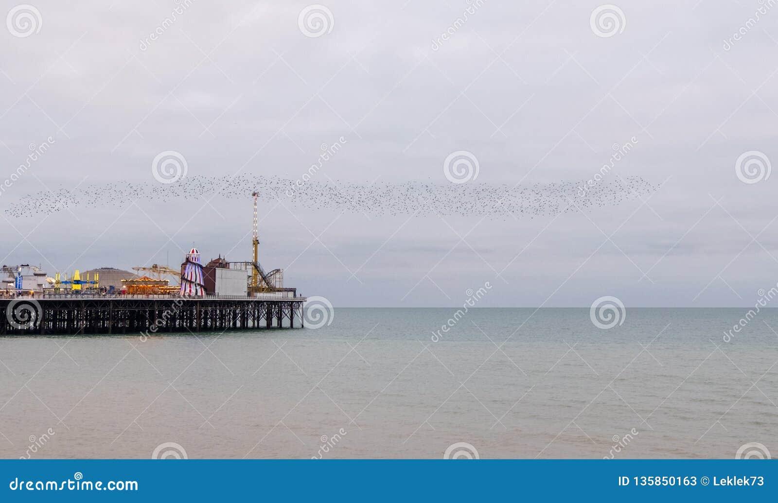Murmuration des étourneaux au-dessus du pilier de palais, Brighton, le Sussex, R-U Photographié une soirée froide en décembre