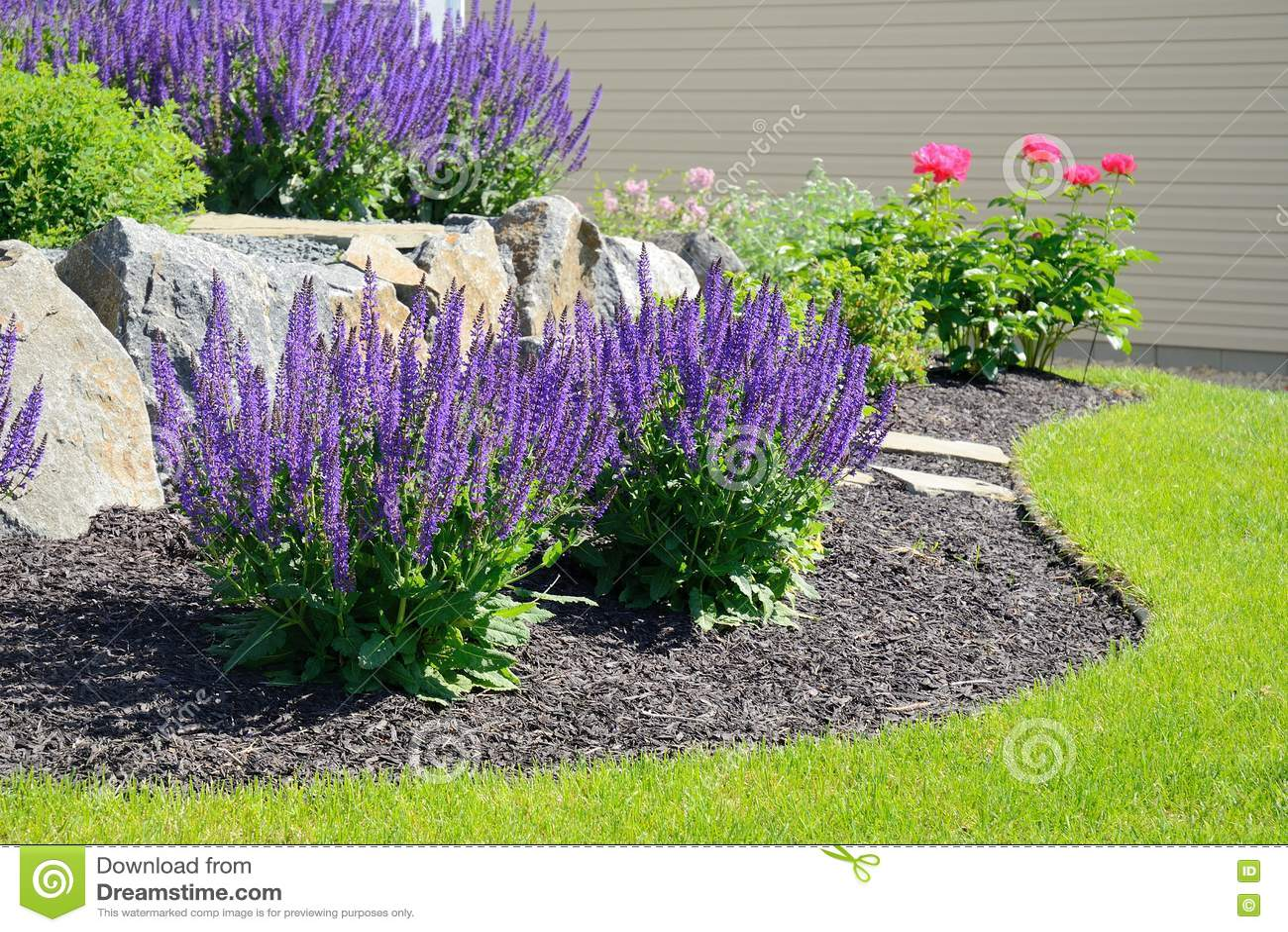 Muro di sostegno della roccia e di Salvia Flowers