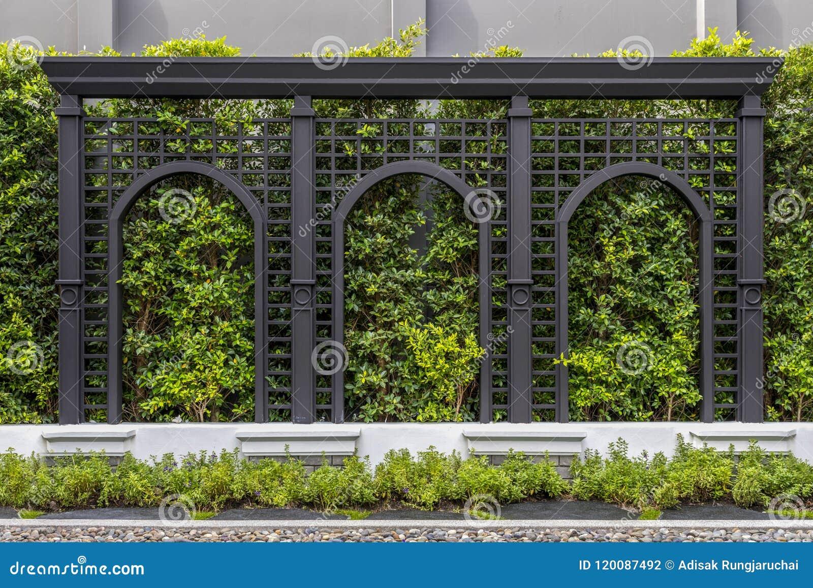 Murs verts de barrières Les arbres verts ornent les murs et les barrières modelées