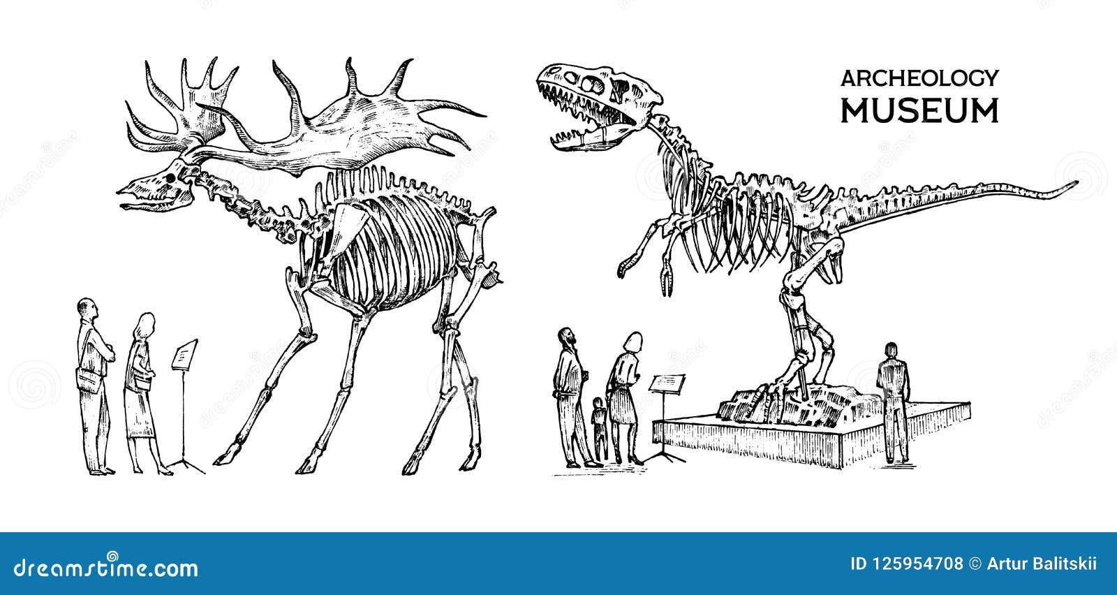 Musée archéologique de vintage Les visiteurs regardent l objet exposé Squelette historique d un dinosaure animal éteint