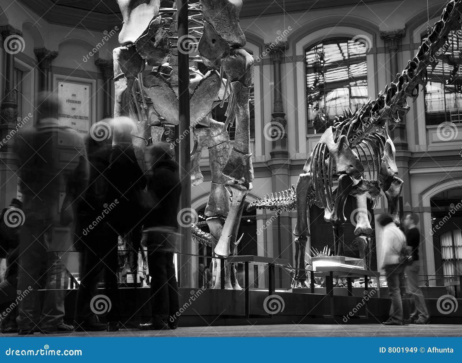 Musée paléontologique à Berlin