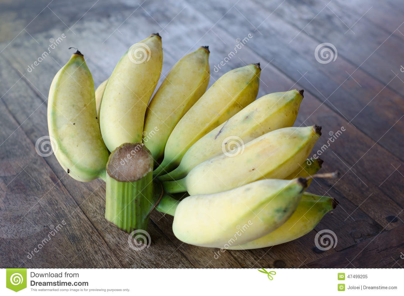 antimicrobial activity of banana musa sapientum Botany the banana plant is the largest herbaceous flowering plant the main or upright stem is actually a pseudostem, growing from a corm, to a height of 6 to 76 meters.