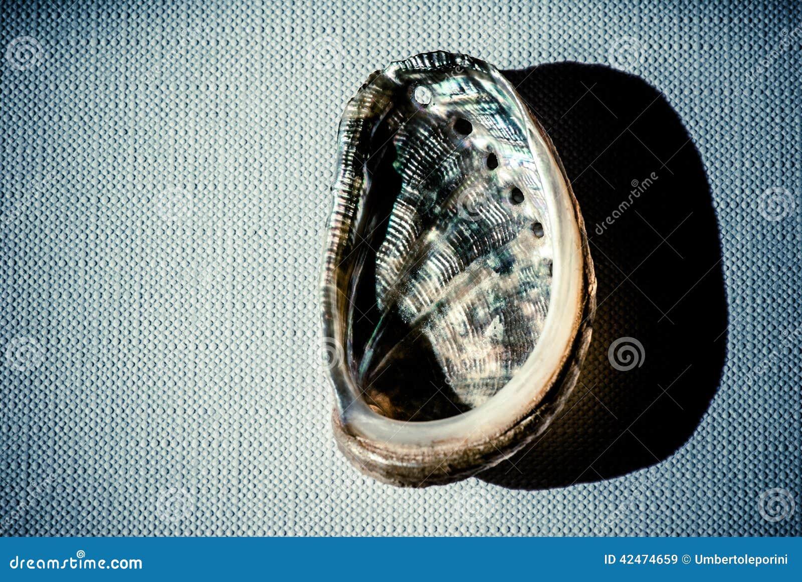 Muschel über Segeltuch
