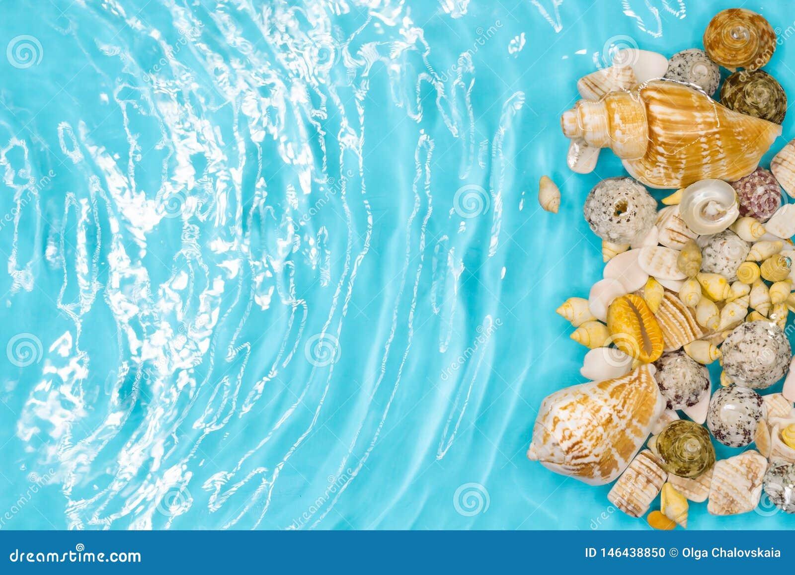 Muschel auf dem Sommerstrand im Meerwasser Blaues Meer, Himmel u Junge Erwachsene