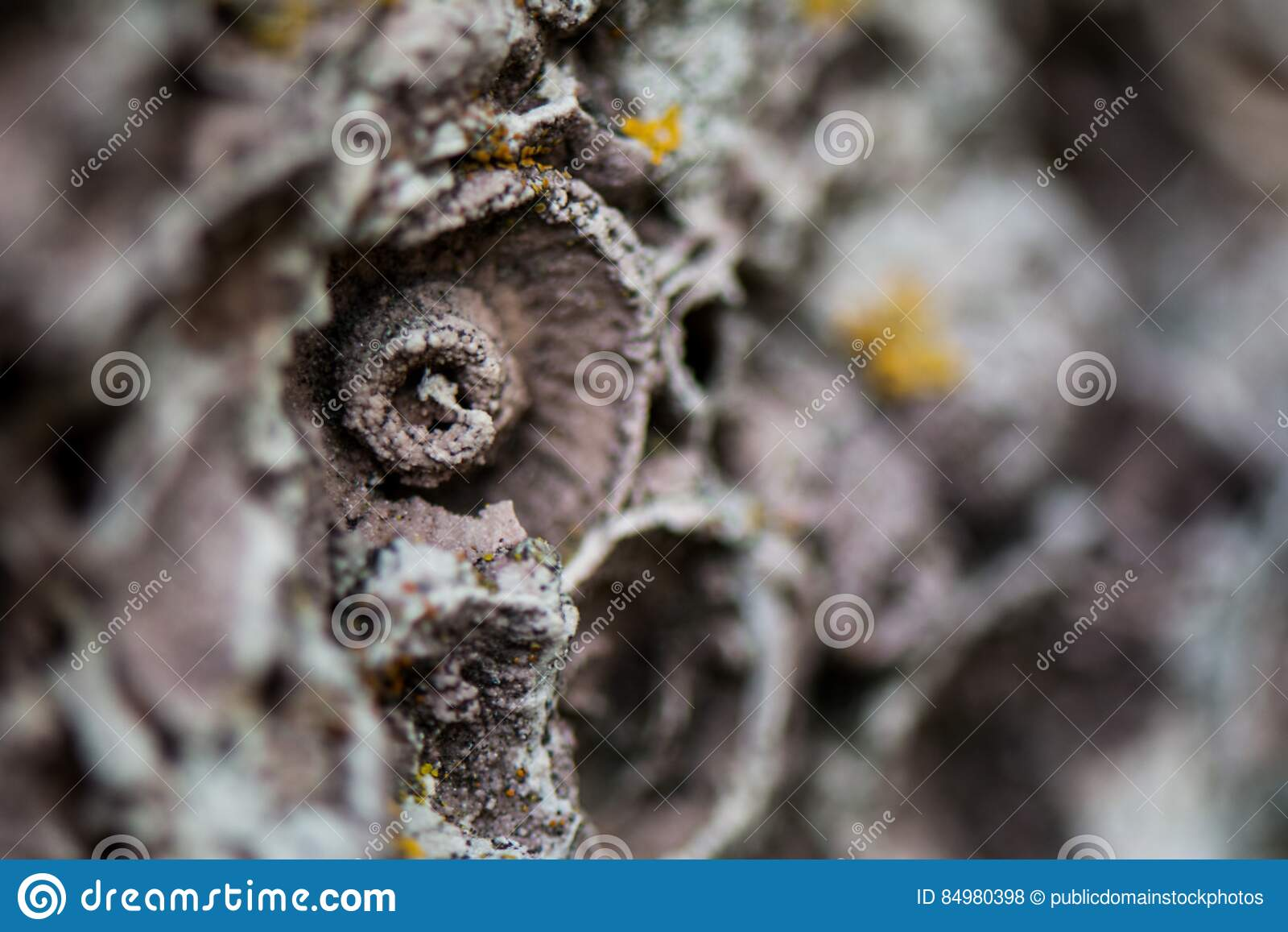 Download Muschelkalk macro stock photo. Image of rough, textured - 84980398