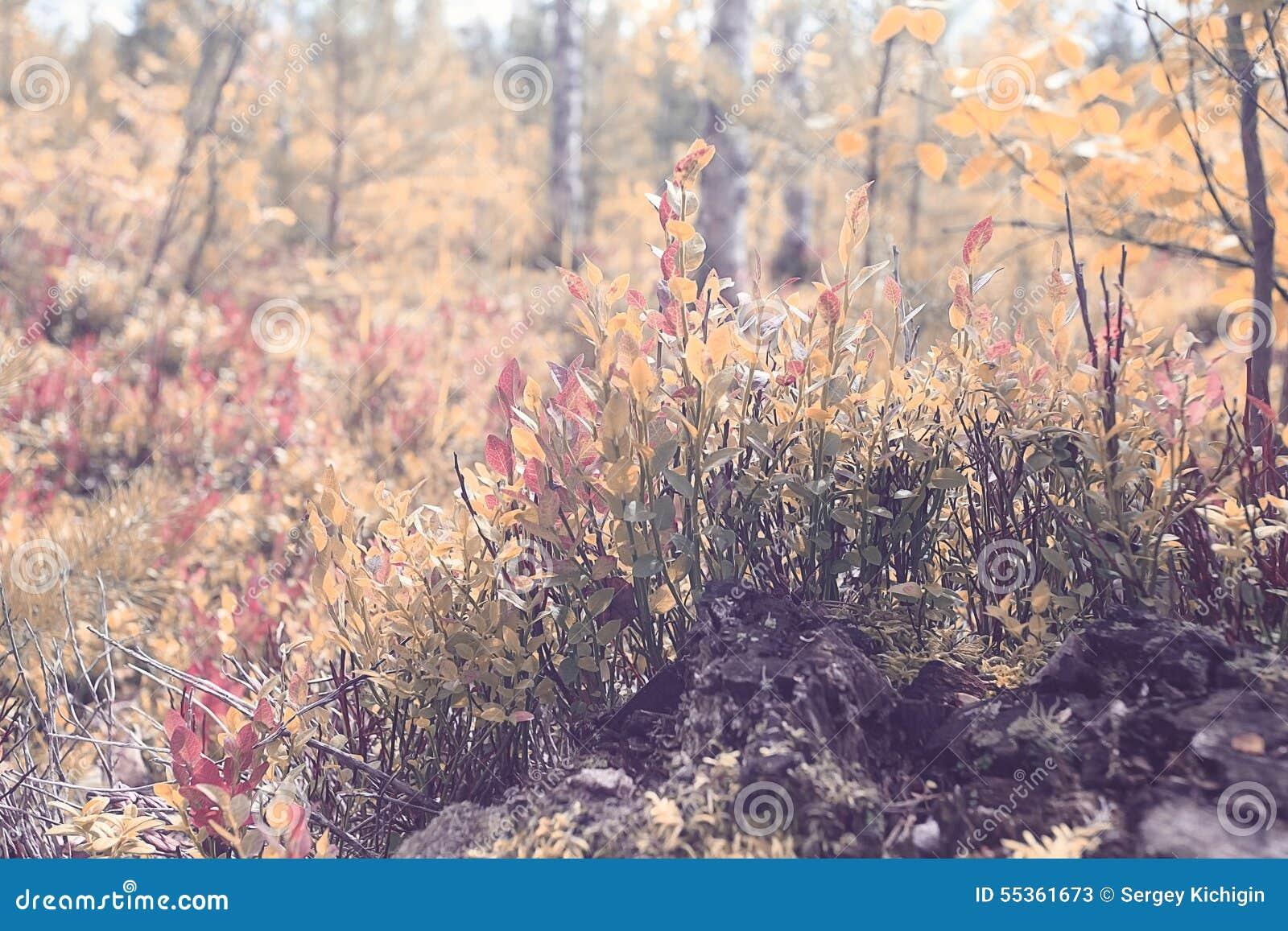 Muschio della foresta di autunno