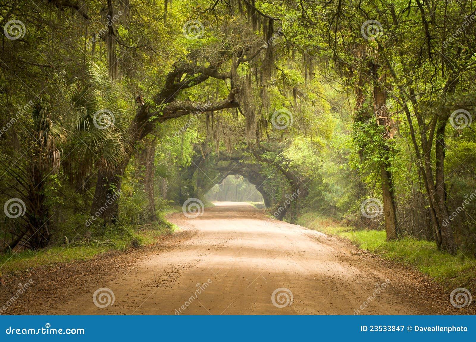 Muschio di sud profondo della foresta della strada non asfaltata dello Sc di Charleston