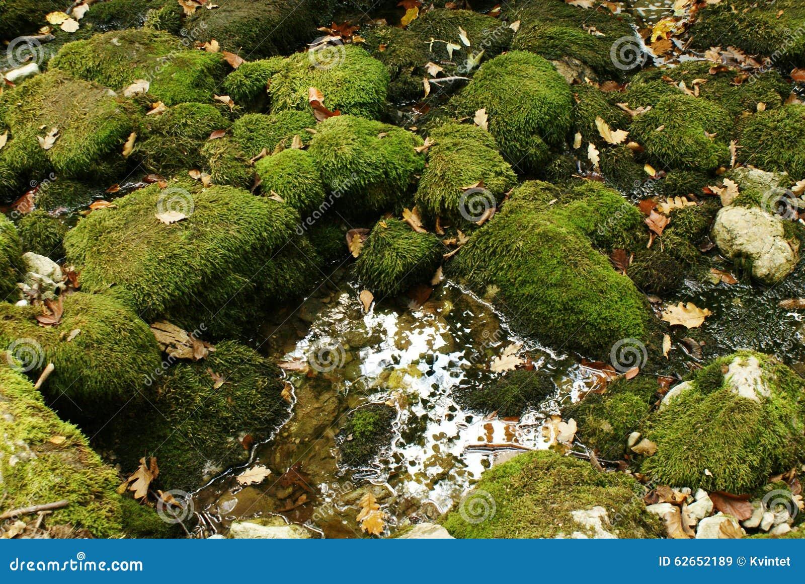 Muschio di verde della natura del fondo sui massi, sulle foglie di autunno e su una pozza di acqua