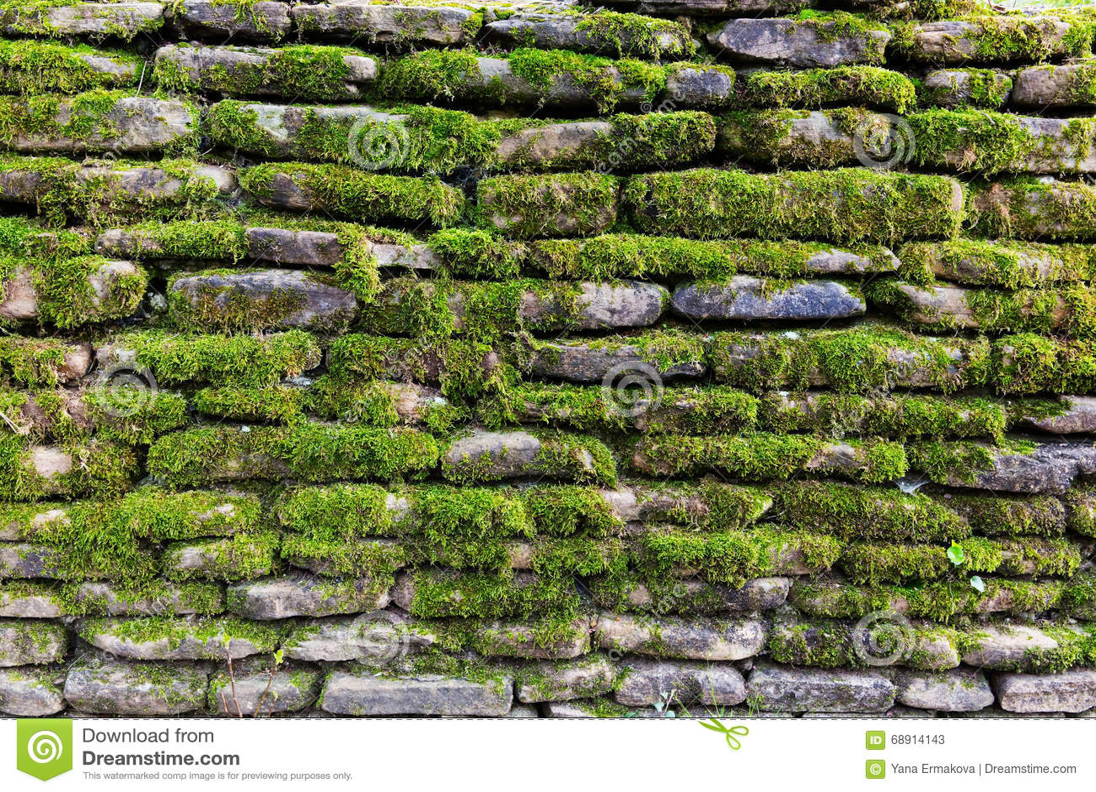 Muschio sulla parete di pietra