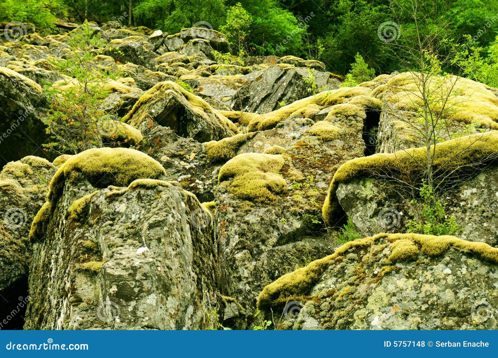Muschio sulle rocce