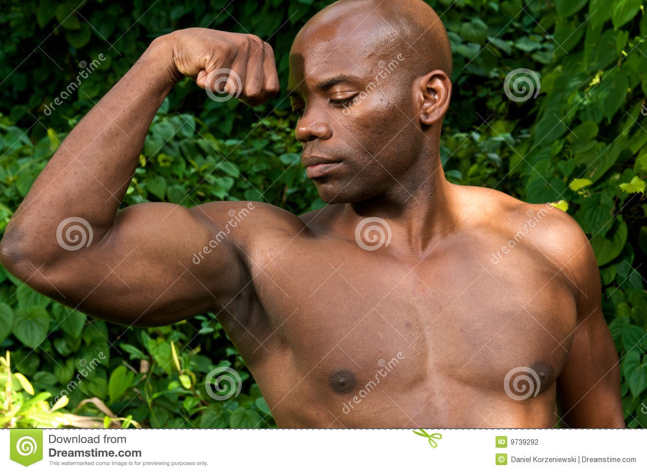 Muscle and Biceps