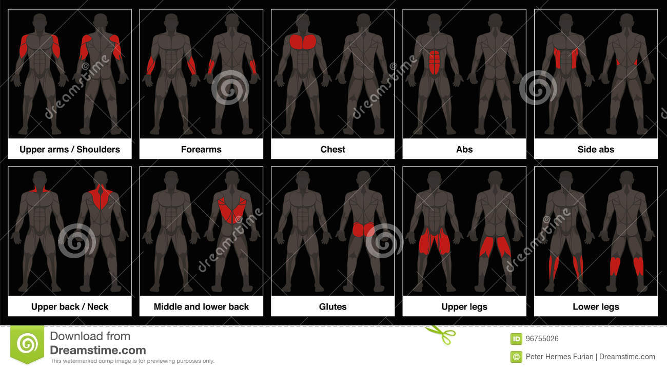 Muscle Chart Male Body Parts Black Background Stock Vector