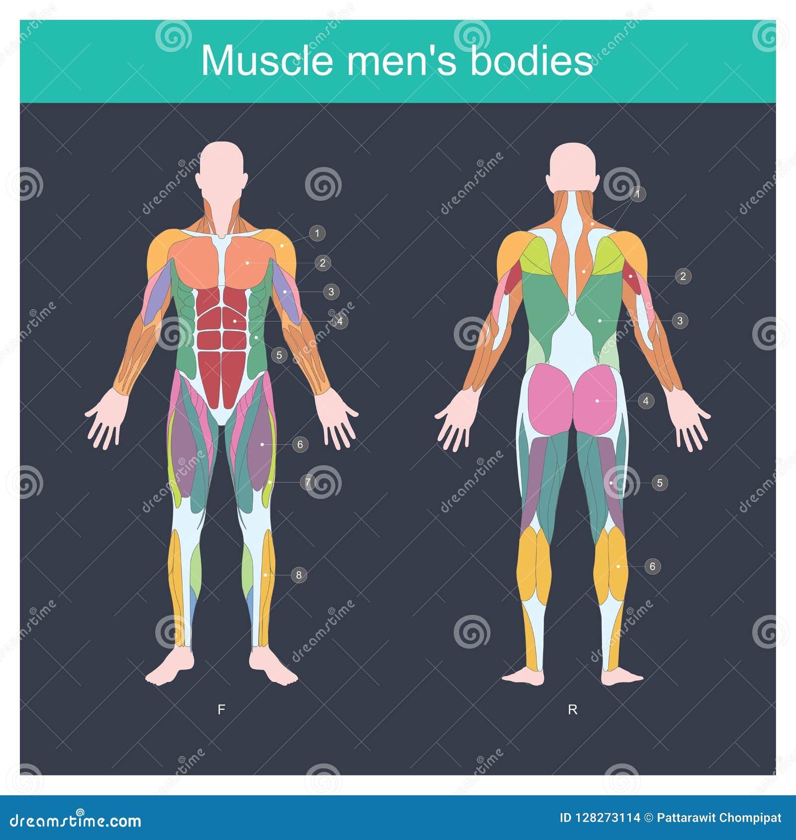 Muscle men bodies