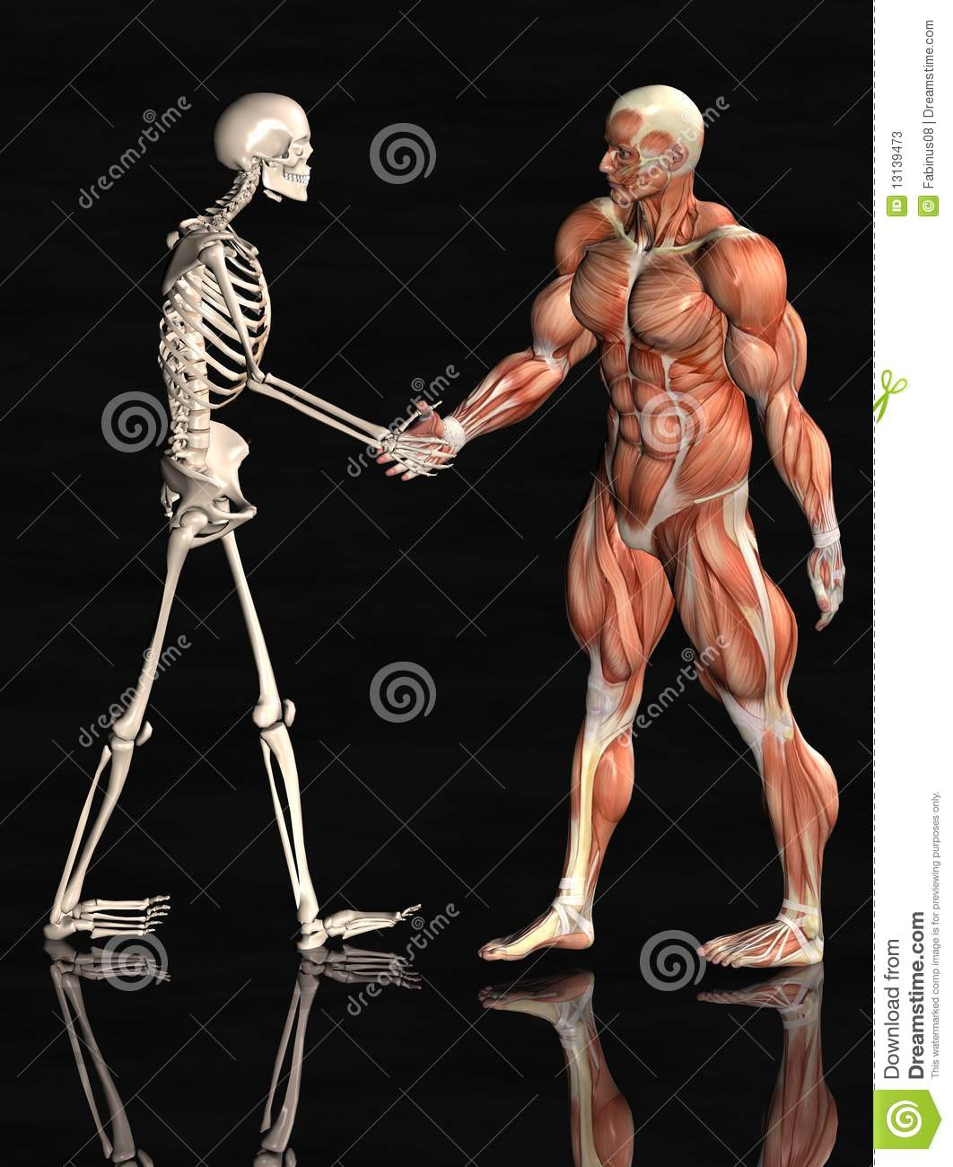 Hbs Skeletal And Muscular Systems - Lessons - Tes Teach