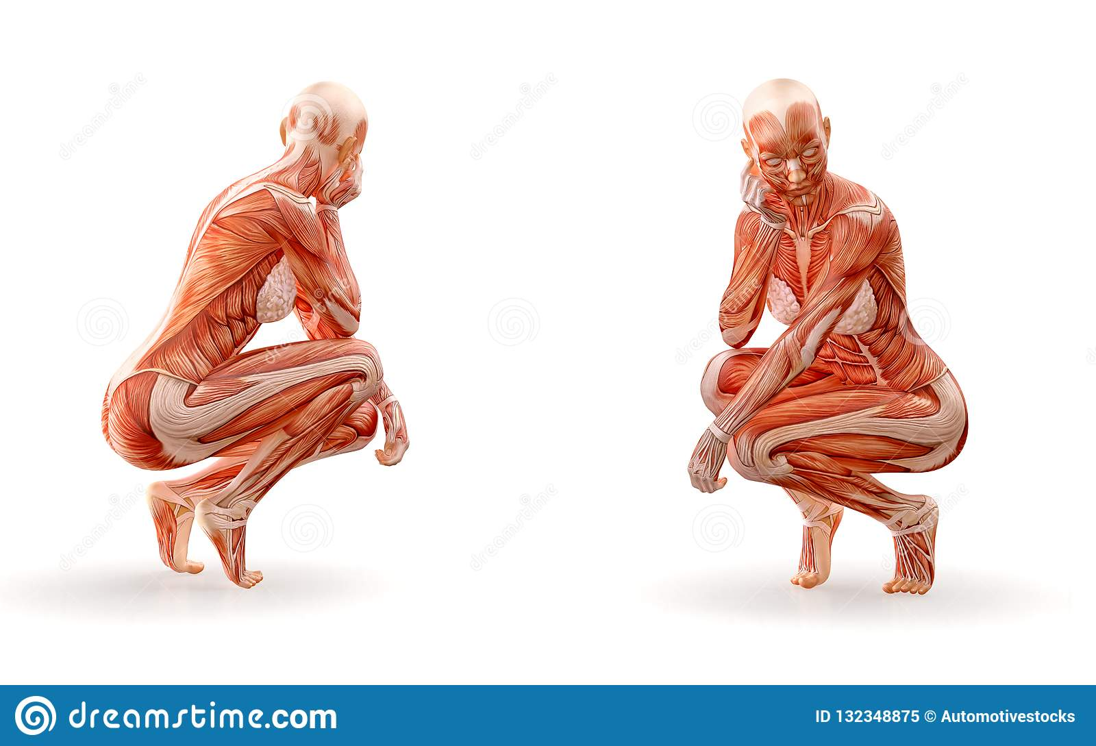 Muscles anatomy female figure workout, isolated. Healthcare, fitness, dancing, diet and sport concept. 3D illustration