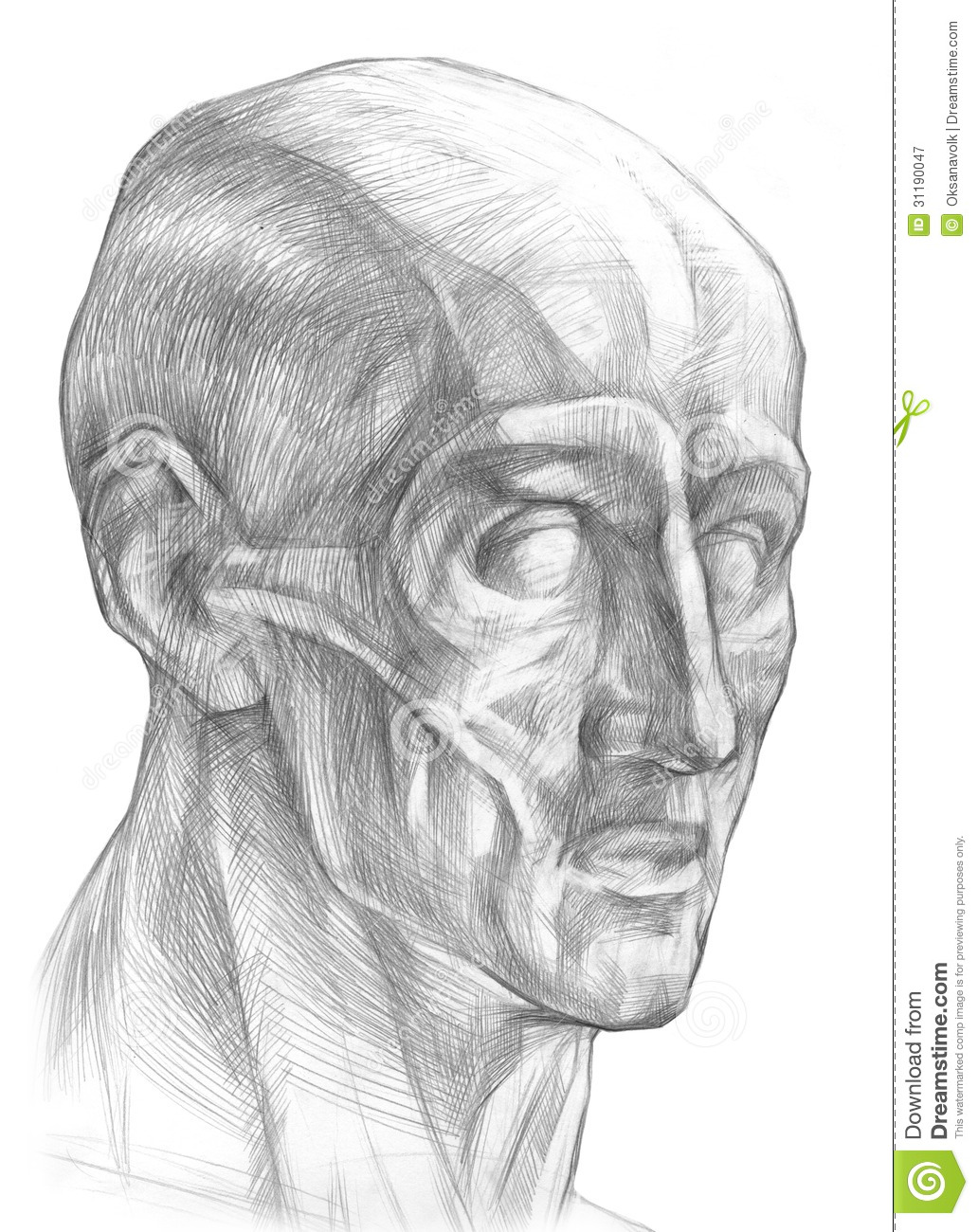 Muscles Of The Human Head Illustration Stock Illustration