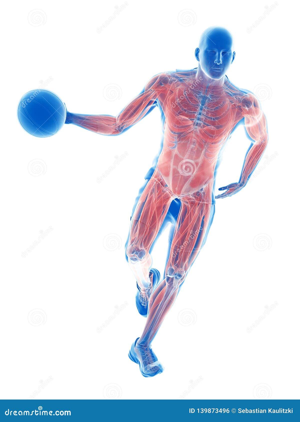 Muscoli dei giocatori di pallacanestro