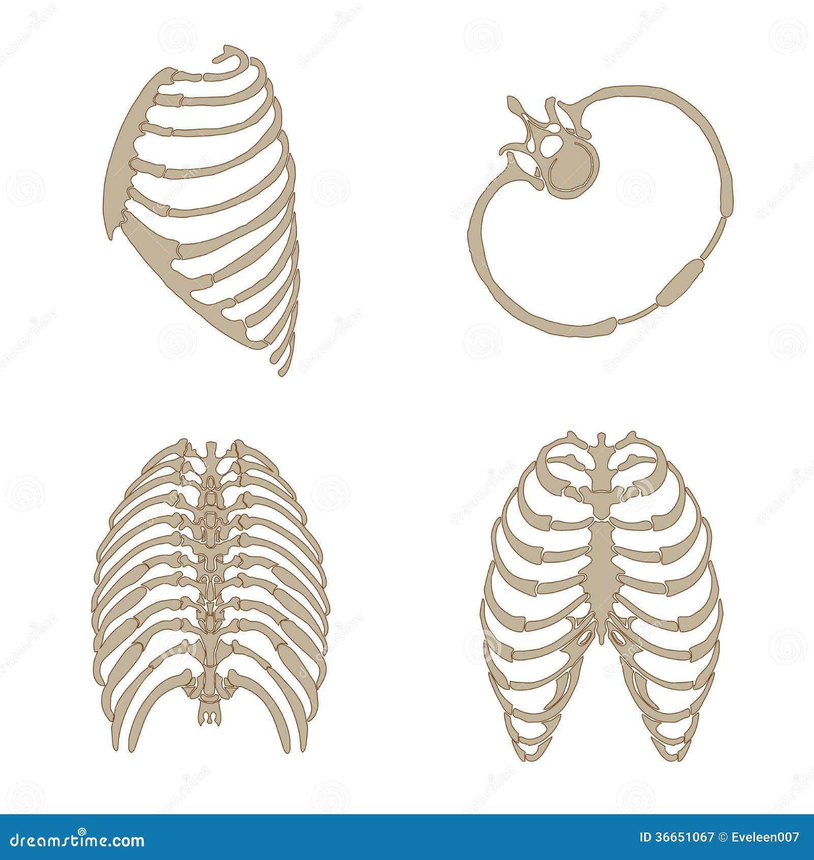 Muscolo dei fronti, anatomia della testa umana,