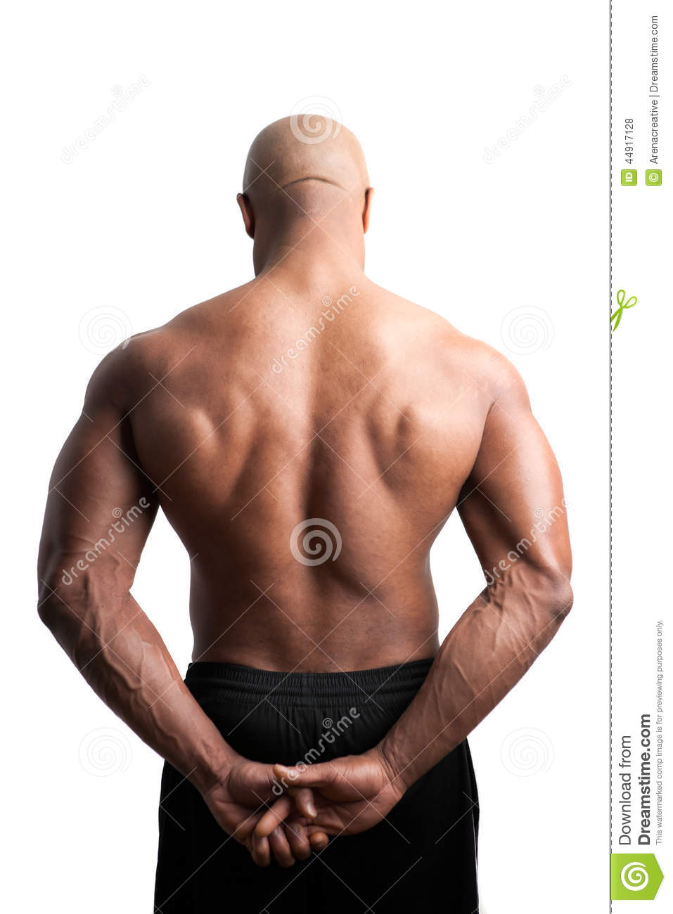 Related Keywords & Suggestions for muscular shoulders