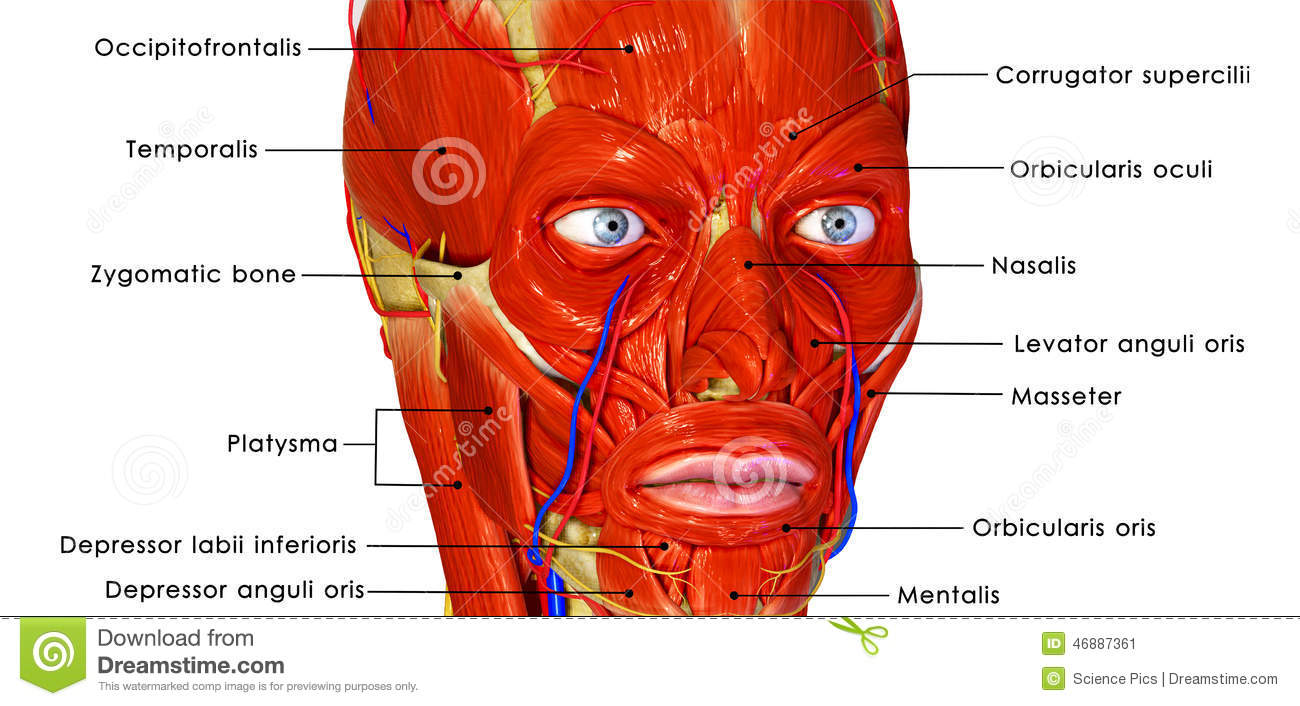 Muscular face stock illustration. Illustration of background - 46887361