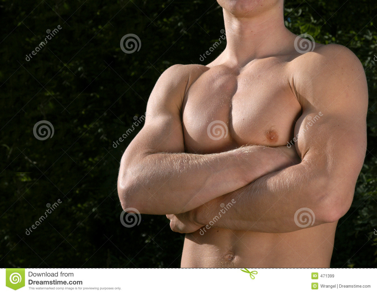 Download Muscular Male Torso stock image. Image of gymnastics, gorgeous - 471399
