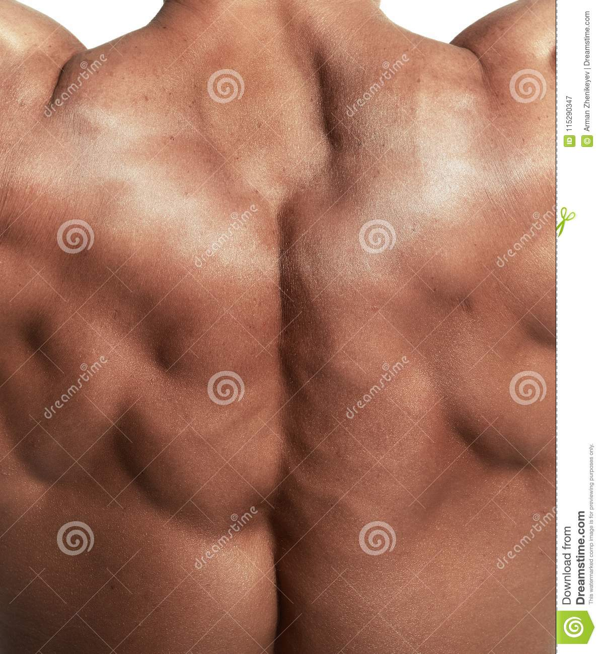 Muscular Torso Of Bodybuilder Stock Image Image Of People