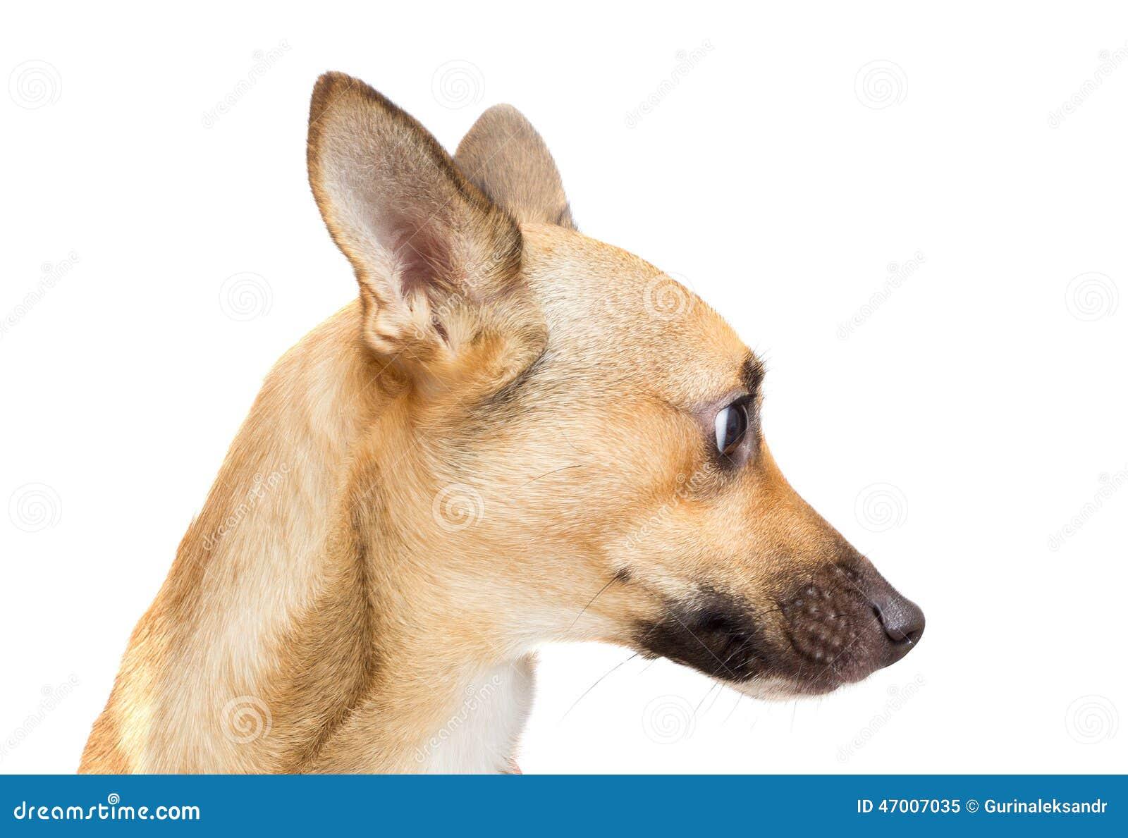 Museau drôle de chien image stock. Image du verticale