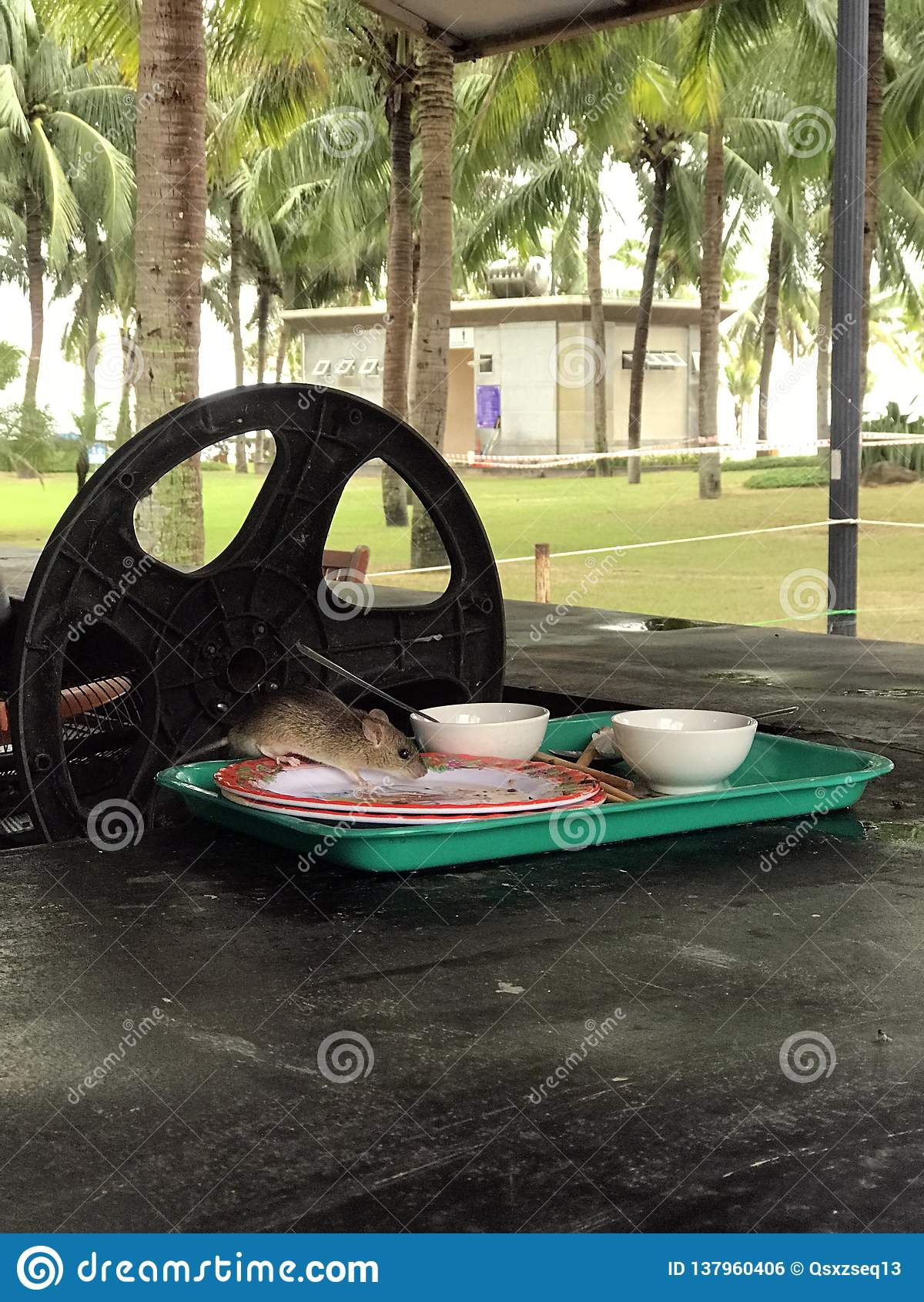 Musen i plattan äter maten cambodia
