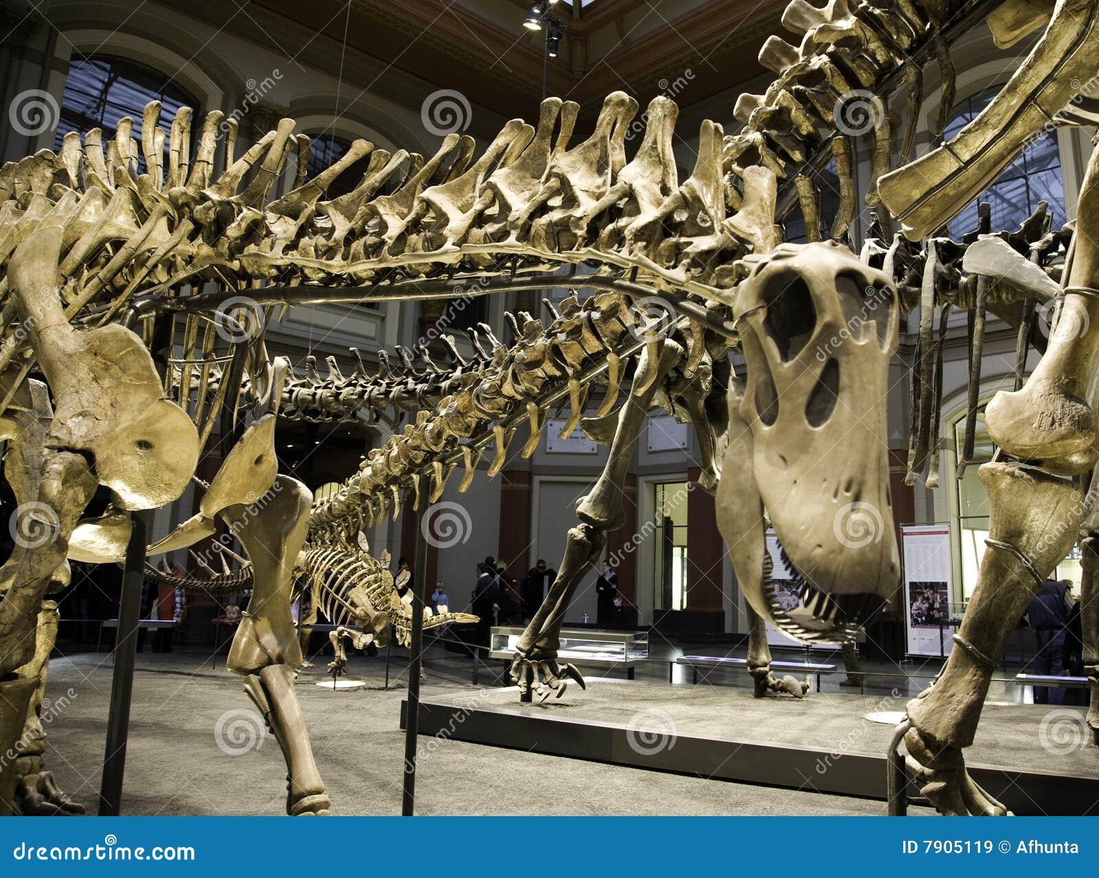 Museu Paleontological em Berlim