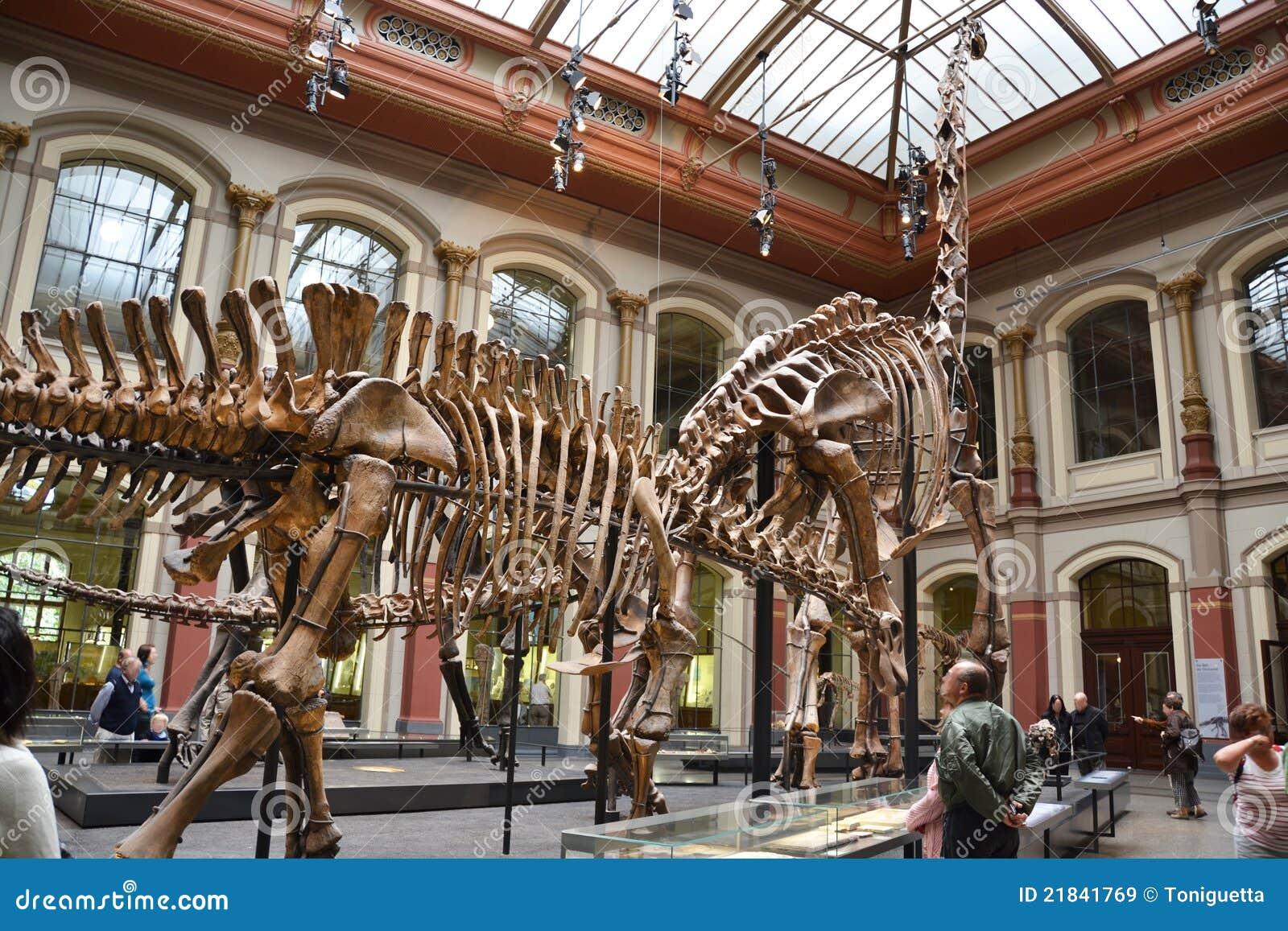 Berlin Natural History Museum Dinosaur