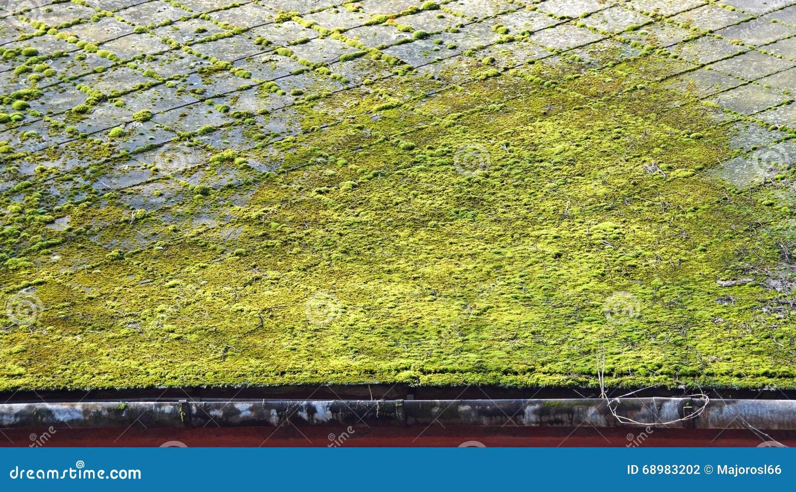 Musgo en el tejado de un edificio