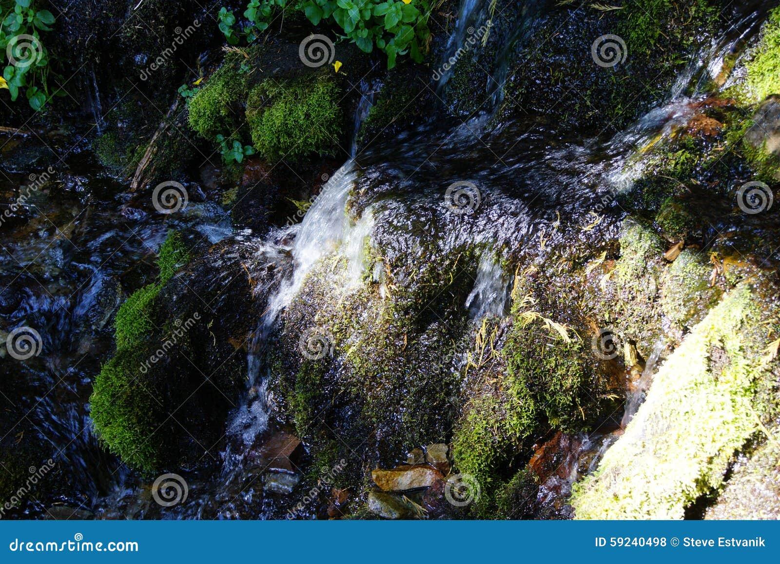 Musgo verde en roca en corriente alpina