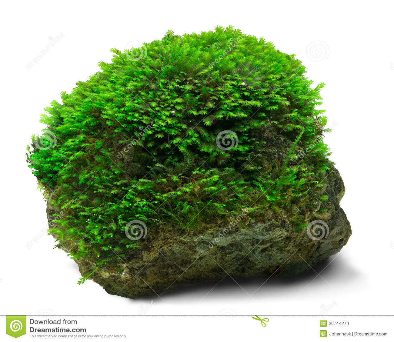 musgo y roca imagenes de archivo imagen 20744274