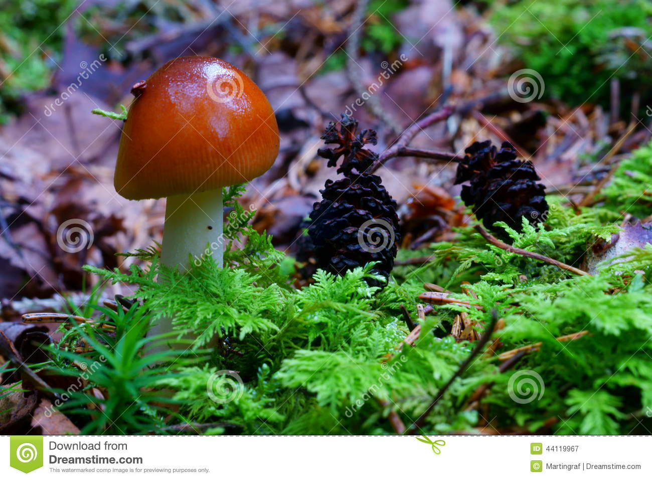 Mushroom In Mixed Forest Stock Photo Image 44119967