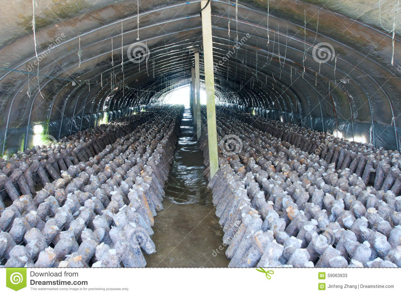 Mushroom cultivation stock image  Image of mushroom, culture