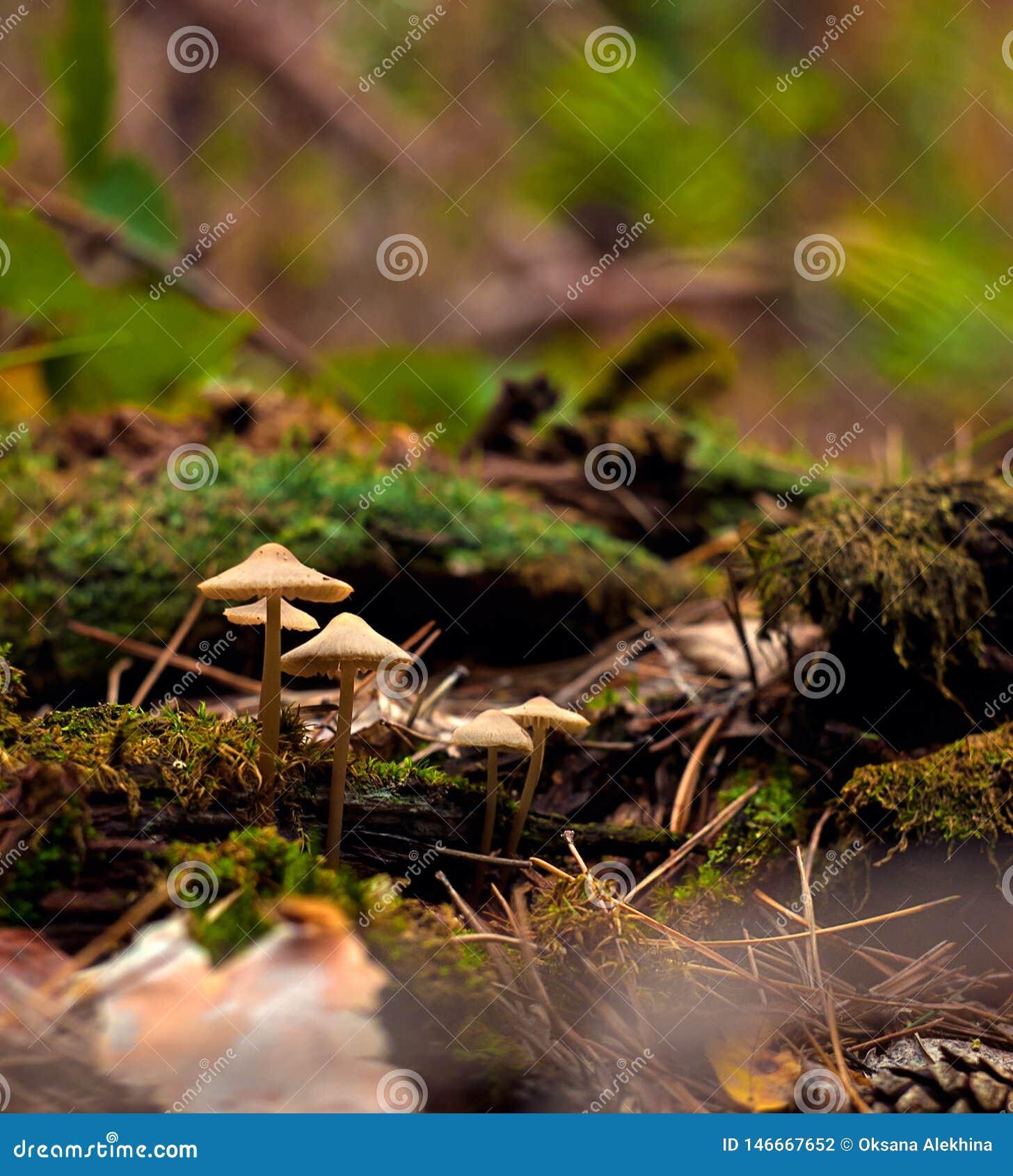 Beautiful closeup of forest mushrooms