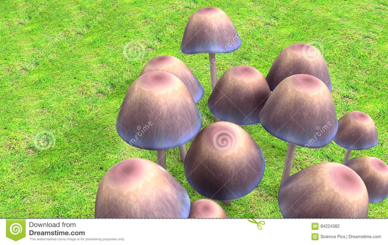 Mushroom stock illustration  Illustration of nutrition - 84224382