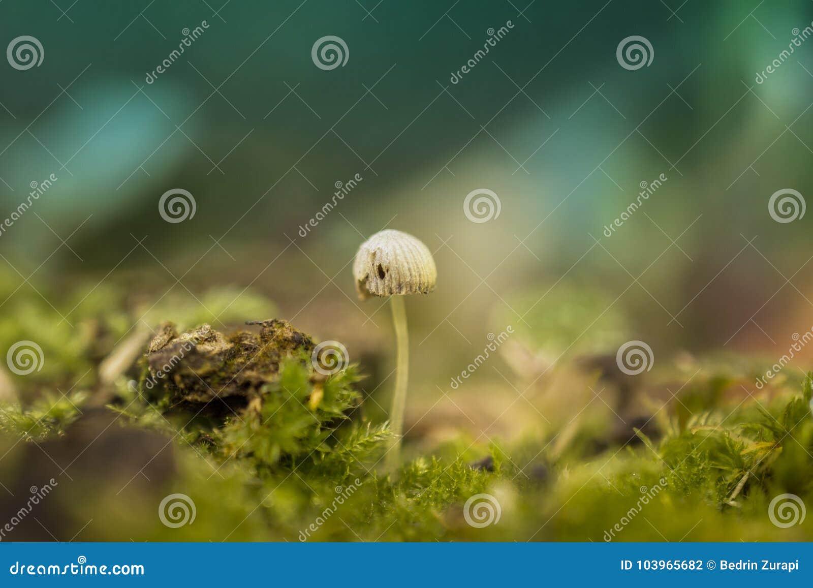 Mushroom fungi small light sweet