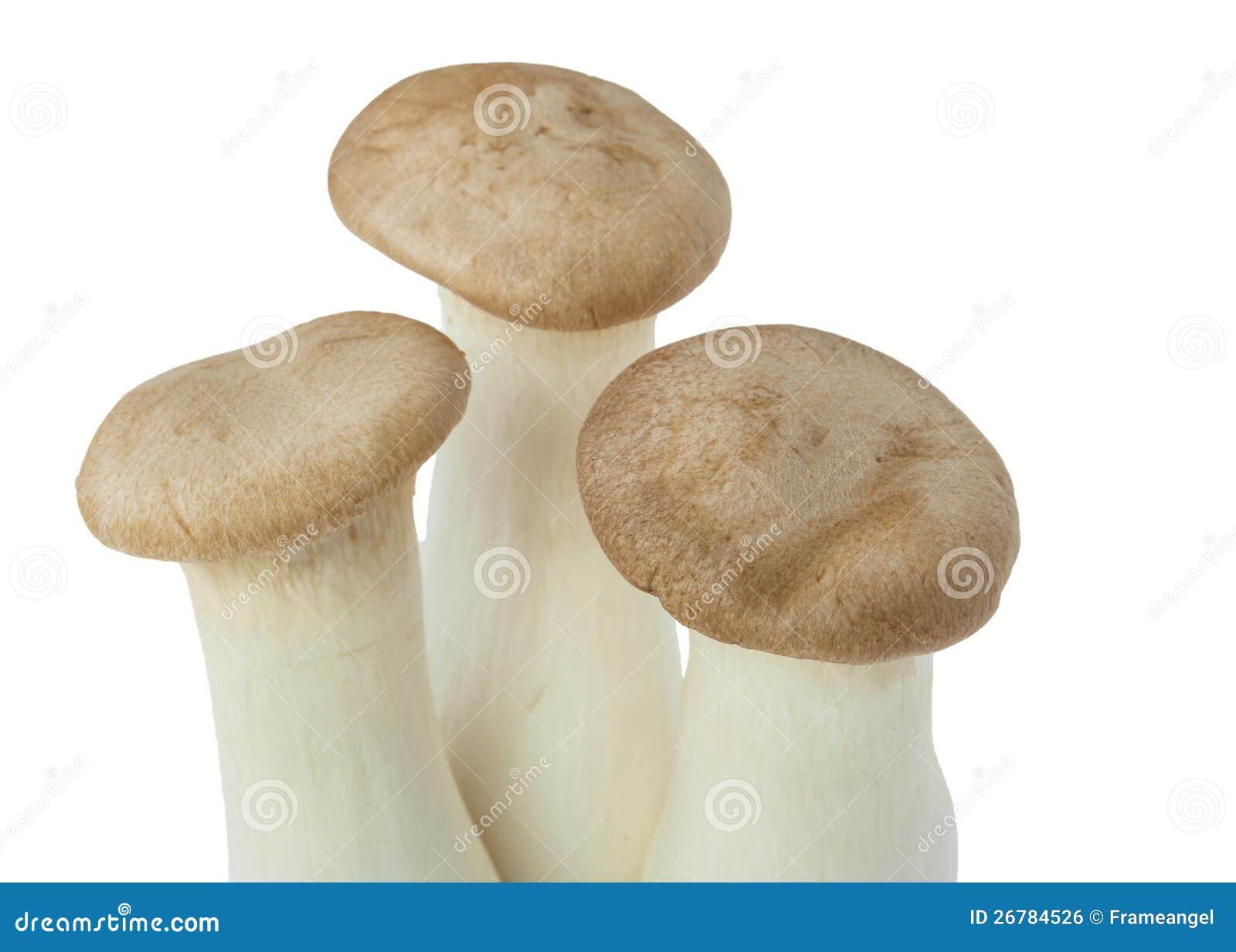 Mushroom Names Eringii Royalty Free Stock Image - Image: 26784526