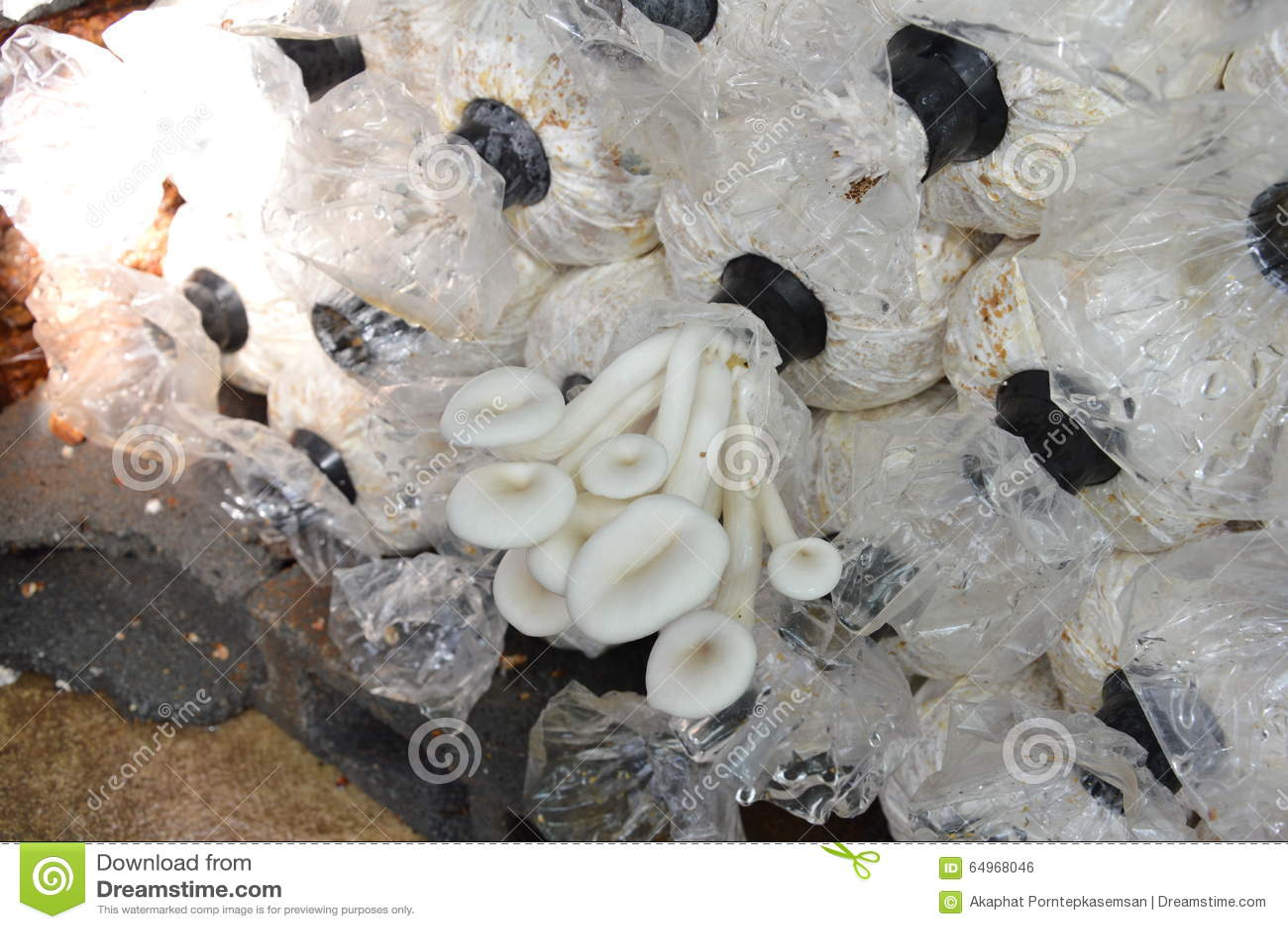 mushroom in plastic bag on backyard garden stock photo image