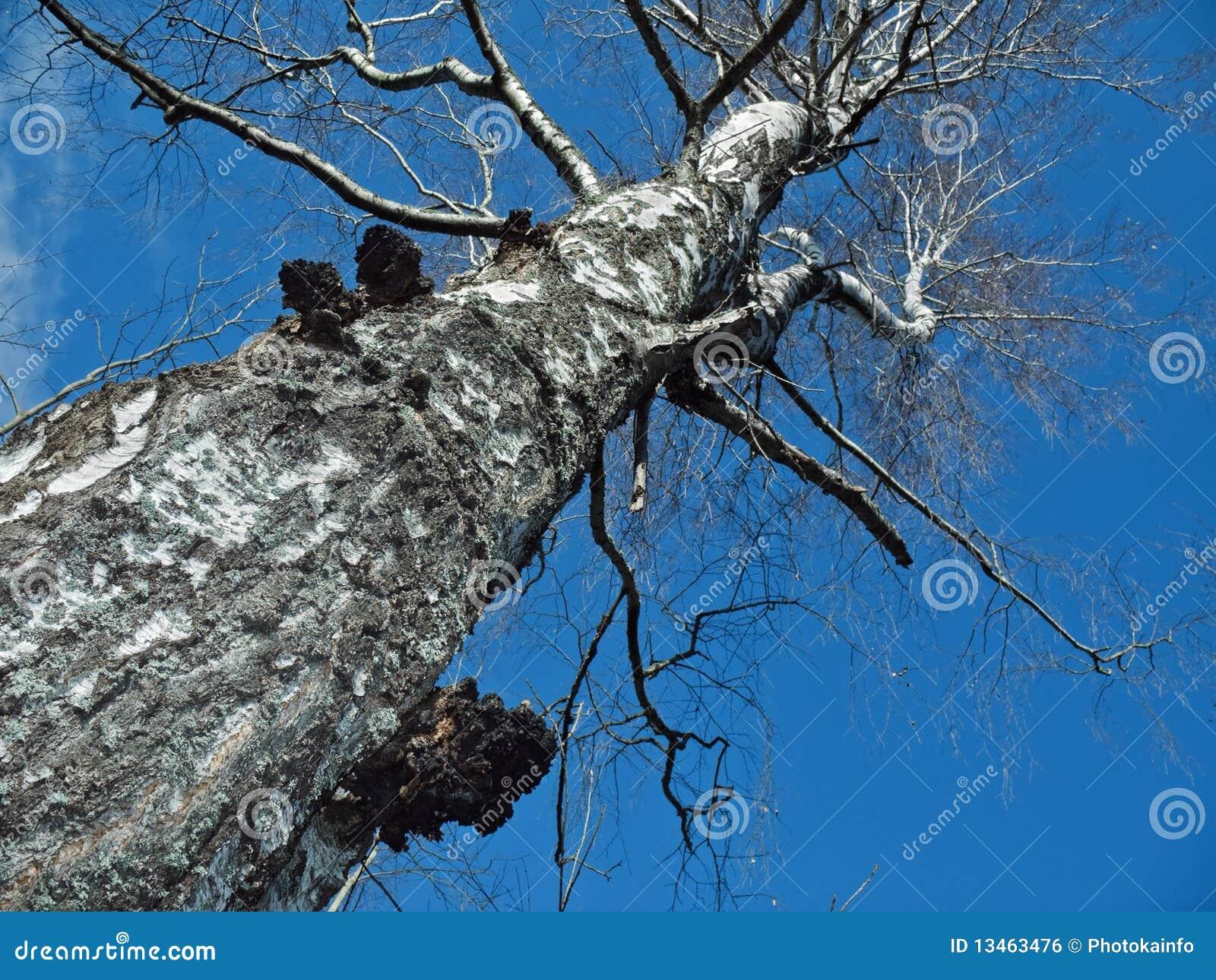 Mushroom on spring birch