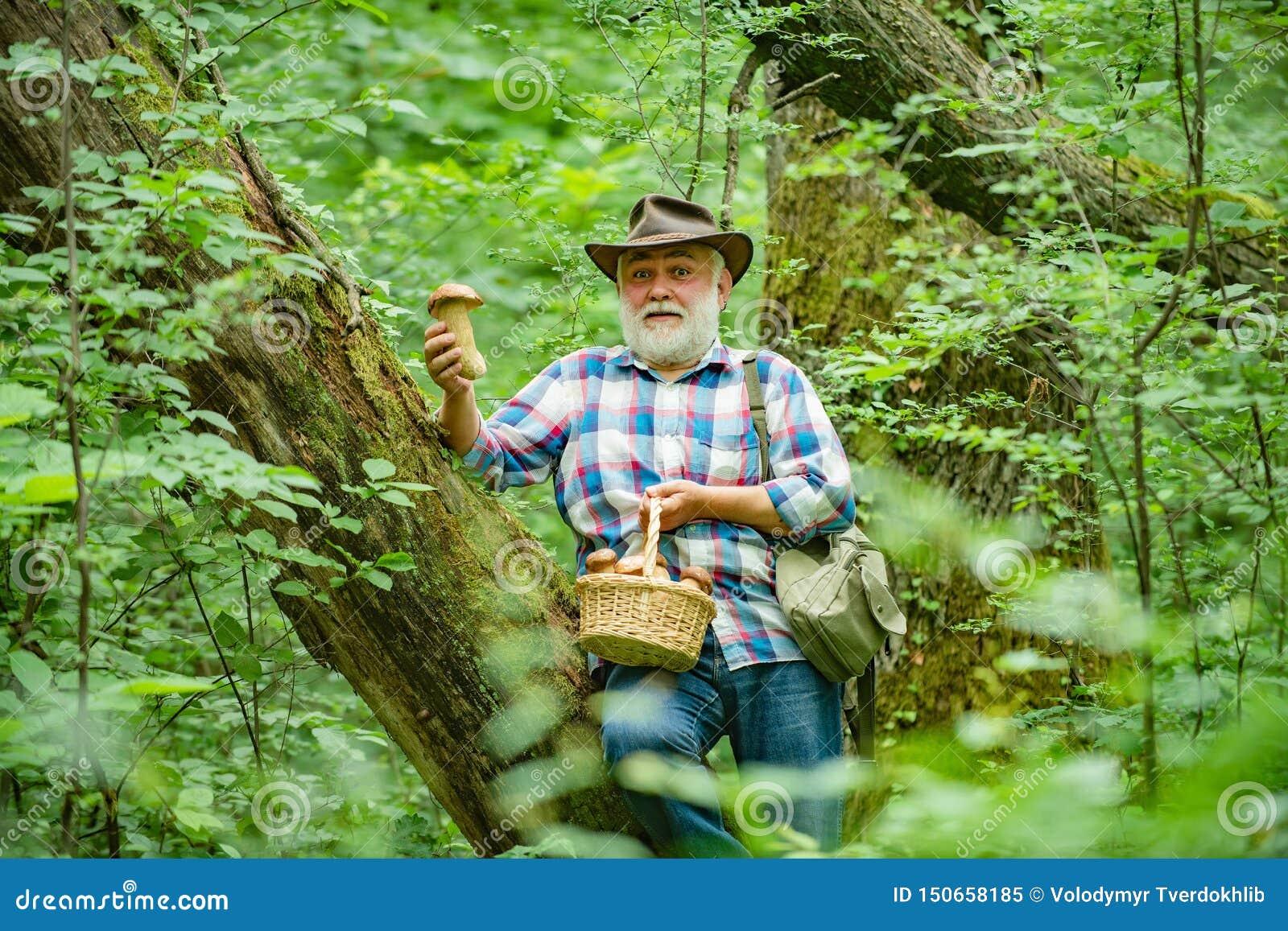 Mushroomer que recolhe a ca?a do cogumelo O homem de sorriso que escolhe cogumelos no sênior da floresta do outono recolhe cogume
